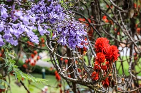 Madera Funchal park 2