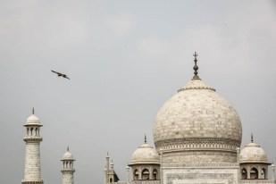 Indie Agra Taj Mahal 4