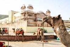 Indie Jaipur przy Pałacu Wodnym