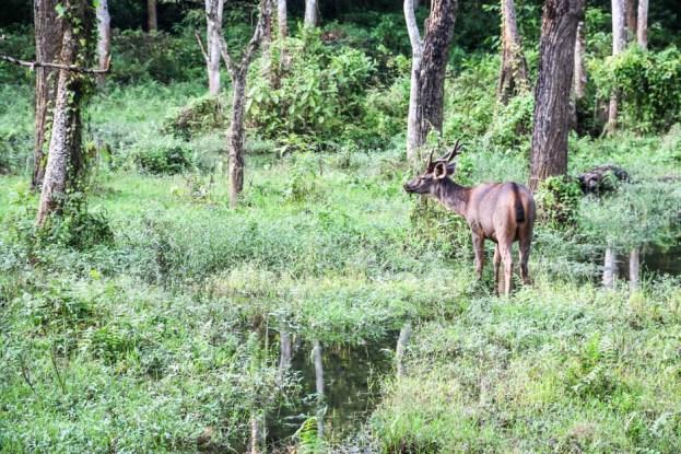 Nepal Chitwan safari kopytne