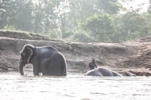 Nepal Chitwan safari słonie