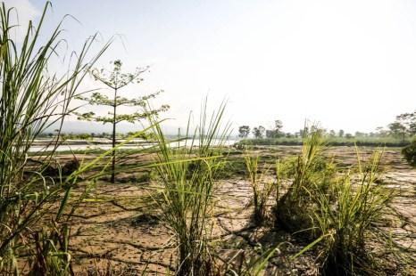 Nepal Chitwan safari widoki