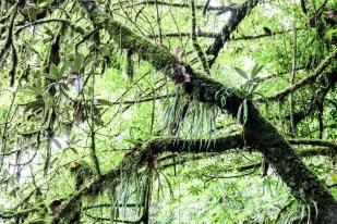Nepal trekking do ABC las deszczowy 2