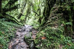 Nepal trekking do ABC las rododendronów