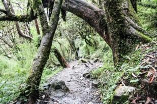 Nepal trekking do ABC las rododendronowy