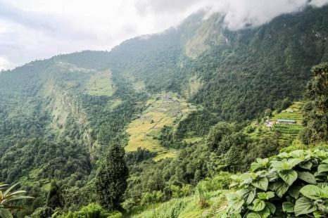 Nepal trekking do ABC w drodze powrotnej do Chhomrong