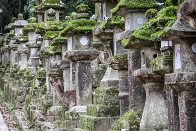 Latarnie Nara jelonek