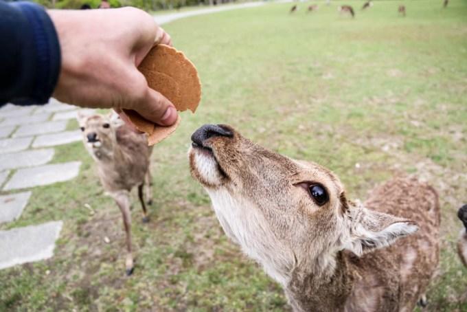 Nara jelonki