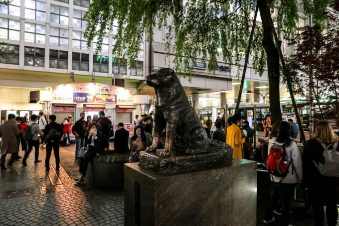 Shibuya crossing piesek Hachiko