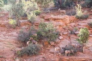 Kozice Zion