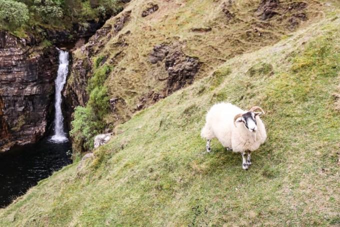 Wodospad i owieczki