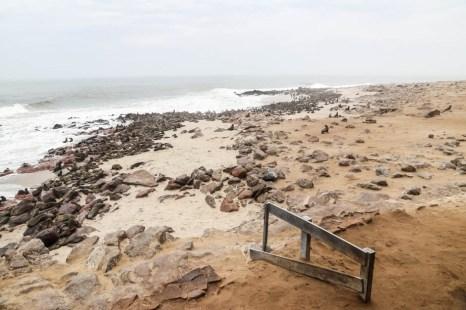 Rezerwat fok Cape Cross widok