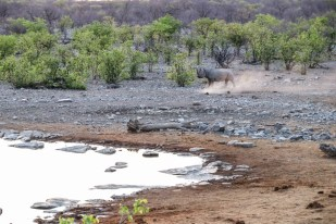 Safari w PN Etosha nosorożec Halali oczko