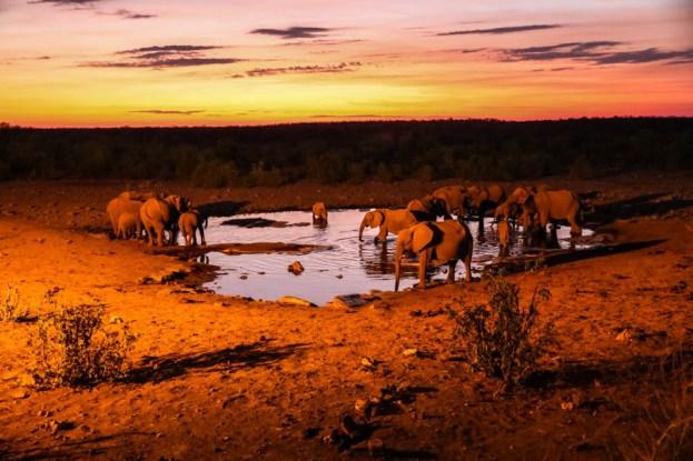 Safari w PN Etosha słonie Halali oczko