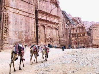 Petra fasady i wielbłądy