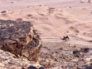 Wielbłądy Wadi Rum
