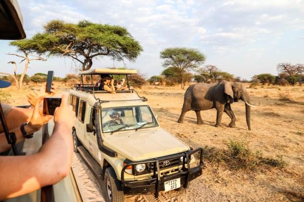 Tanzania PN Tarangire slon i auta