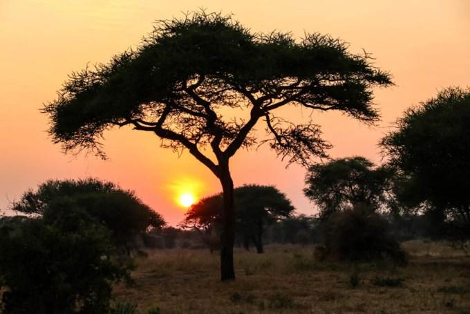 Tanzania PN Tarangire wschod slonca