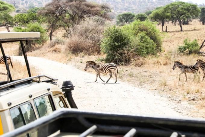 Tanzania PN Tarangire zebry droga