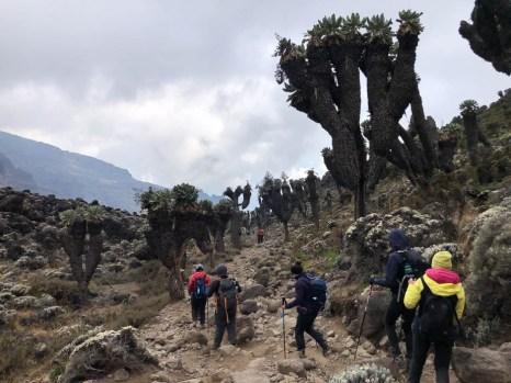 Trasa Machame przed baranco camp