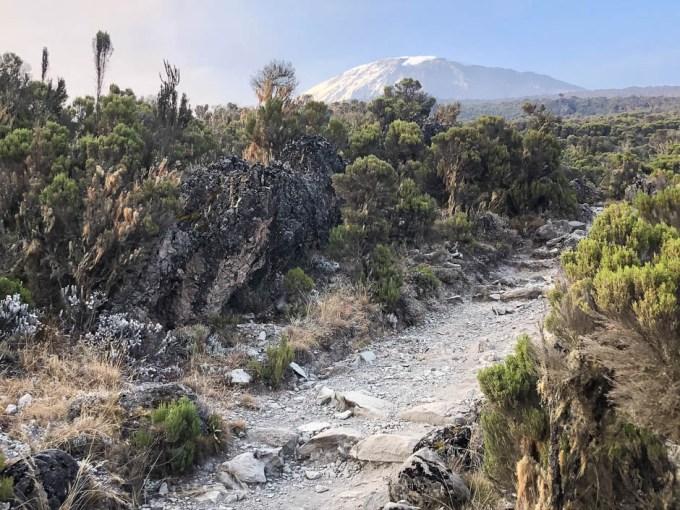 Trekking Kilimandzaro ostatnie widoki na Kili