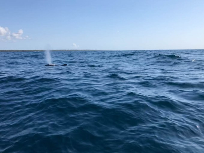 Zanzibar delfiny 2