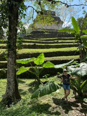 Palenque rośliny
