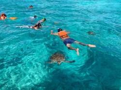 Tulum snorkeling żółwie