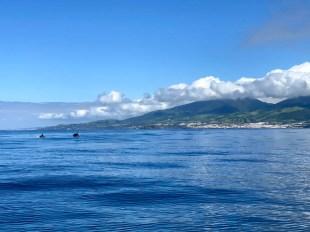 Azory rejs na delfiny