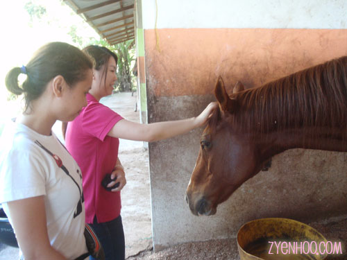 Ika and Jocey patting a horse while waiting for our turn for the trail ride