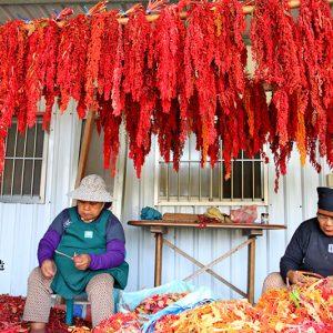 南迴旅遊金峰太麻里台東紅藜 (47)