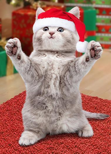 Funny Christmas Card Christmas Cat Hug From