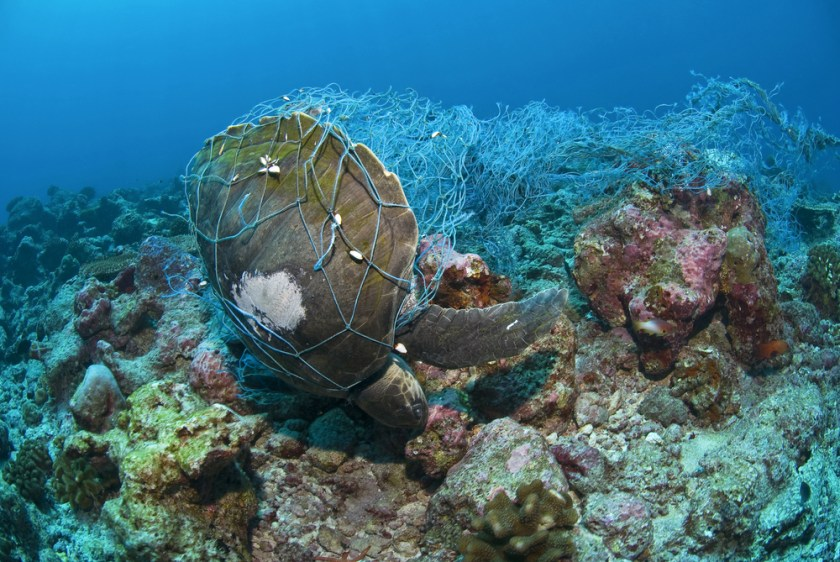 Turtle-fishing-net