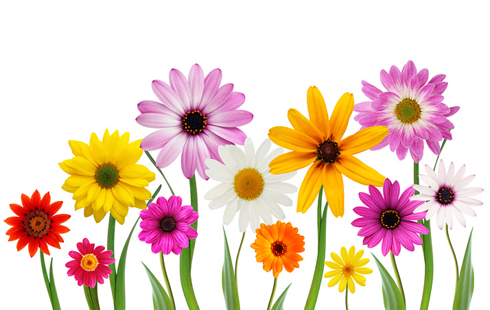 Free Stock Photo Spring Flowers The Shutterstock Blog