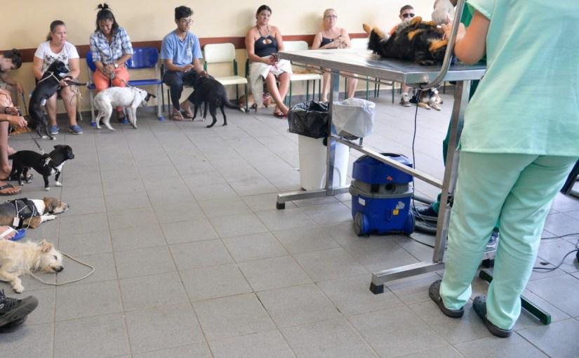MUTIRÃO DE CASTRAÇÃO DE CÃES E GATOS, REALIZADO PELA PREFEITURA DE TATUÍ, ATENDE 239 ANIMAIS NO JARDIM SANTA RITA DE CÁSSIA