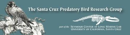 Santa Cruz Predatory Bird Research Group