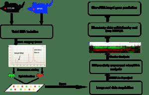 Gene and miRNA arrays | Cornell University College of
