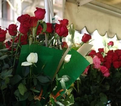 Parada de rosas