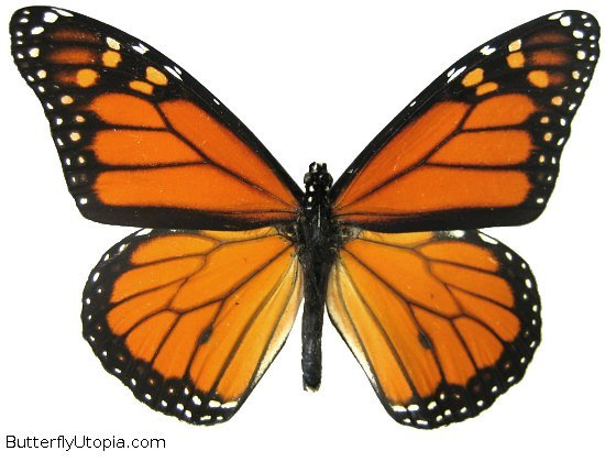 Image result for picture of a butterfly