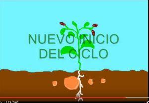 planta dos