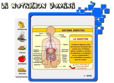 digestion2