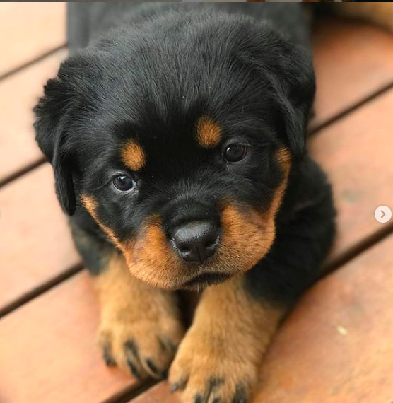 Cuteness Overload These Adorable Puppy Pics Will Make Your Heart Melt It S Rosy