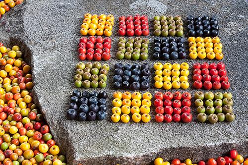 Rowan Berry Squares