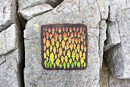 Oak Leaf Colour Square