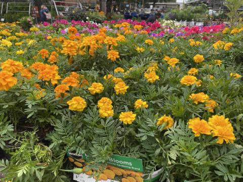 If youre impatient, try planting marigolds now. They are fast bloomers, and so you'll see your hard work pay off quickly!