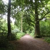 Thorncombe Woods.1