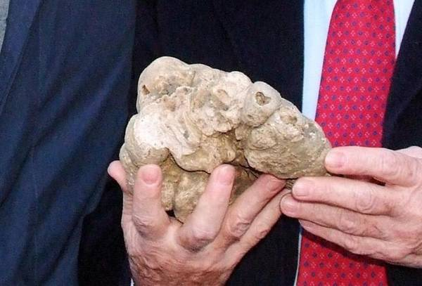 Tartufo da un kg in dono a Obama da Acqualagna