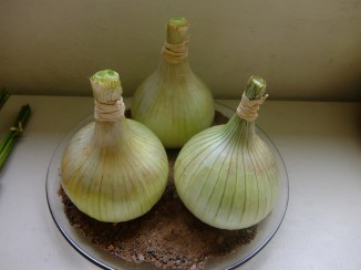 Trio of Onions - Paul Picton