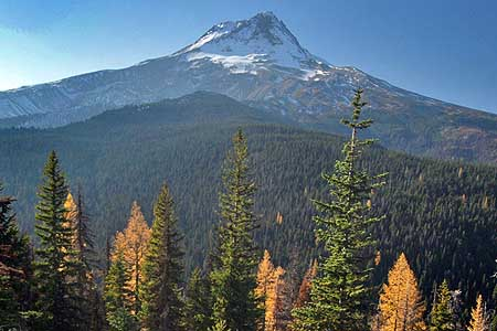 These mature, healthy forests of western larch, ponderosa pine and Douglas fir along Bluegrass Ridge survived the fire
