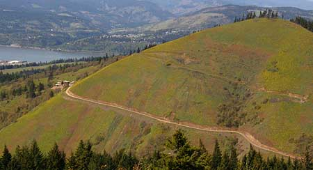 These fragile slopes on Hood River Mountain -- covered in their spring blanket of yellow balsamroot -- were recently scarred with a driveway to yet another ill-conceived trophy home.